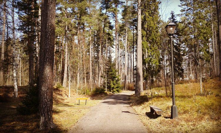 Plats för vila på väg mot Minne - skogskyrkogardar | ello