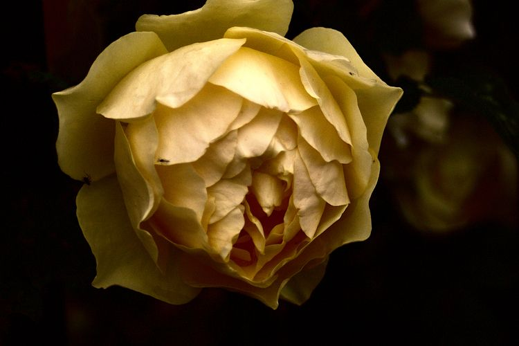 Colour Botanical 293 - flowerphotography - dorian-stretton | ello