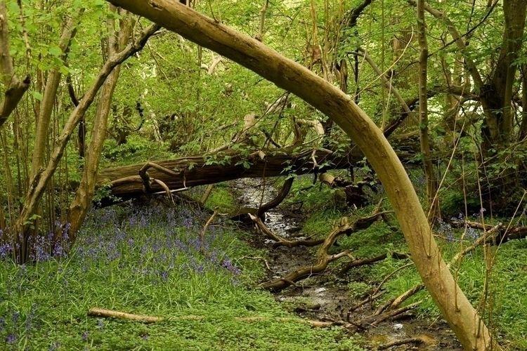 Fairy Fantasy Woods , bluebells - elizahermionephotography | ello