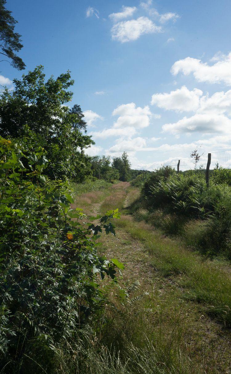 Promenade bucolique en forêt de - gclavet | ello
