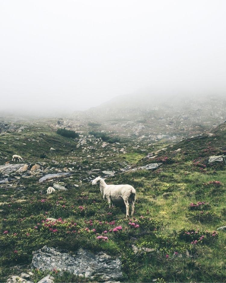 Crossing alps - artimages   ello
