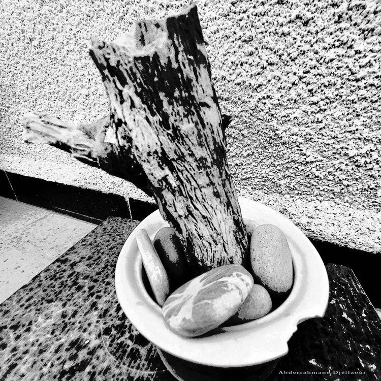 est-ce planter bois mort dans p - abderrahmanedjelfaoui | ello