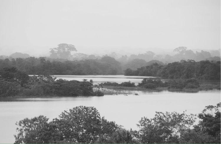 SELVA - leticia, amazonas, colombia - zrchr   ello