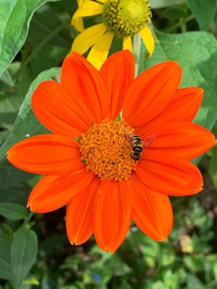 floral, flower, botanical, orange - depressobean | ello