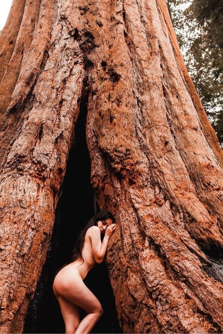 amazing trees world portrait on - racheldashae | ello