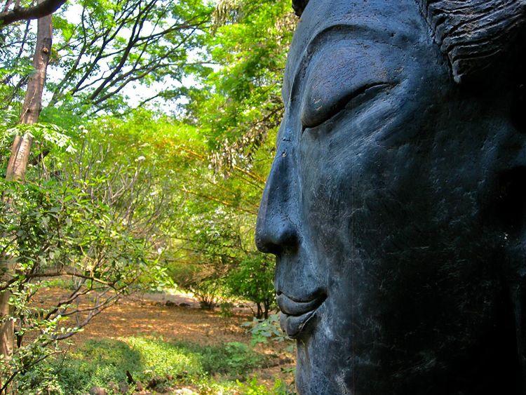 Buddha asked: gained meditation - jcd8   ello