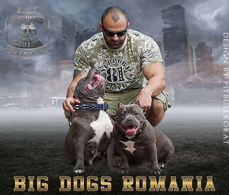 Banner design Dog Kennel contac - apbt-game-dogs | ello