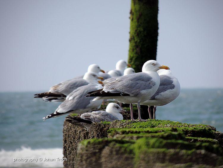 photography Johan Troch - nature - johantroch | ello