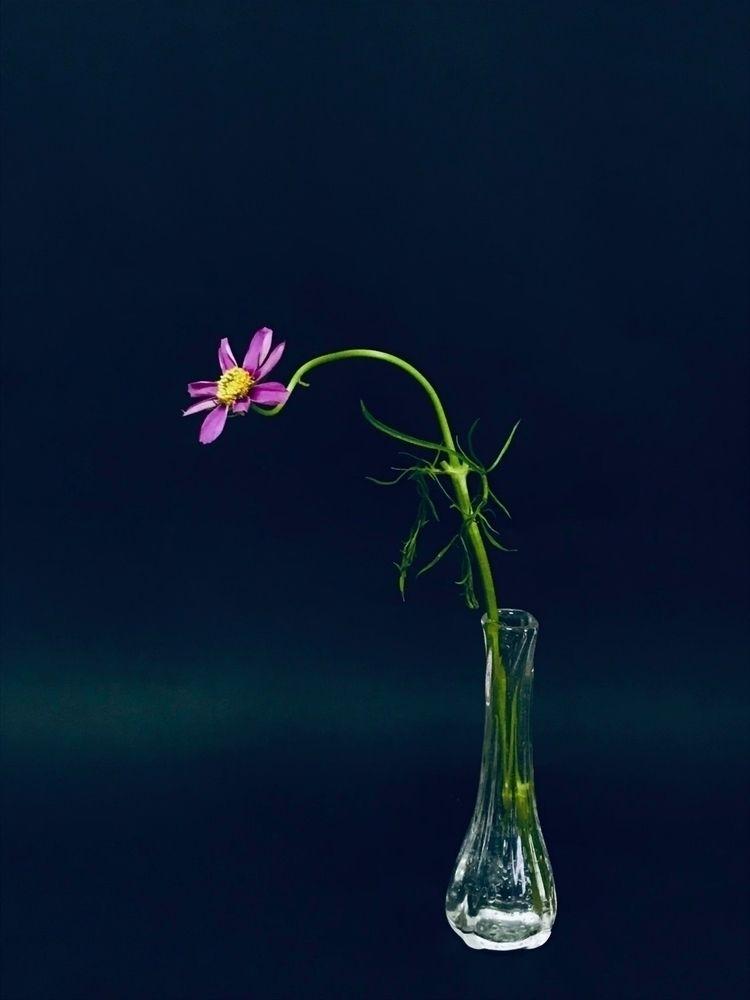 ikebana works - flowerarrangement - flower-ak   ello