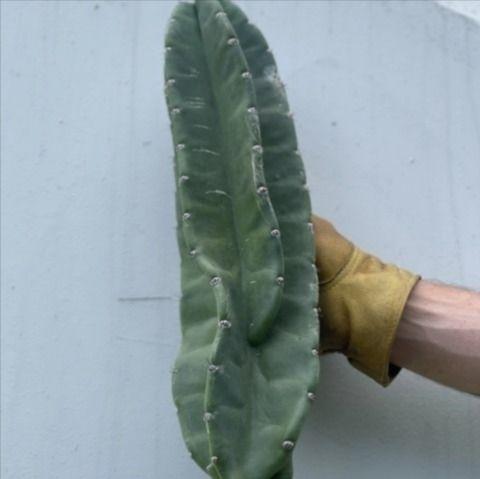 Benefits Indoor Plants | Varnis - varnishandvine | ello