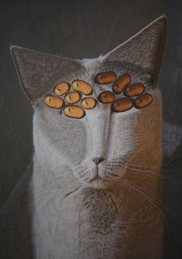 Unknown Cat 8.2 11.6 inches - cats - loladupre | ello
