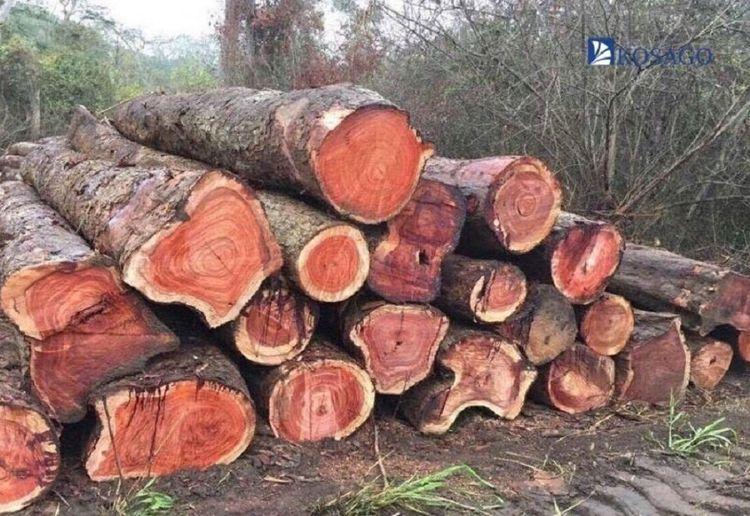 Các loại gỗ Hương trên thị trườ - khosandepkosago | ello