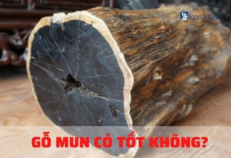Gỗ Mun là gì? Cây gỗ mun loại c - khosandepkosago | ello