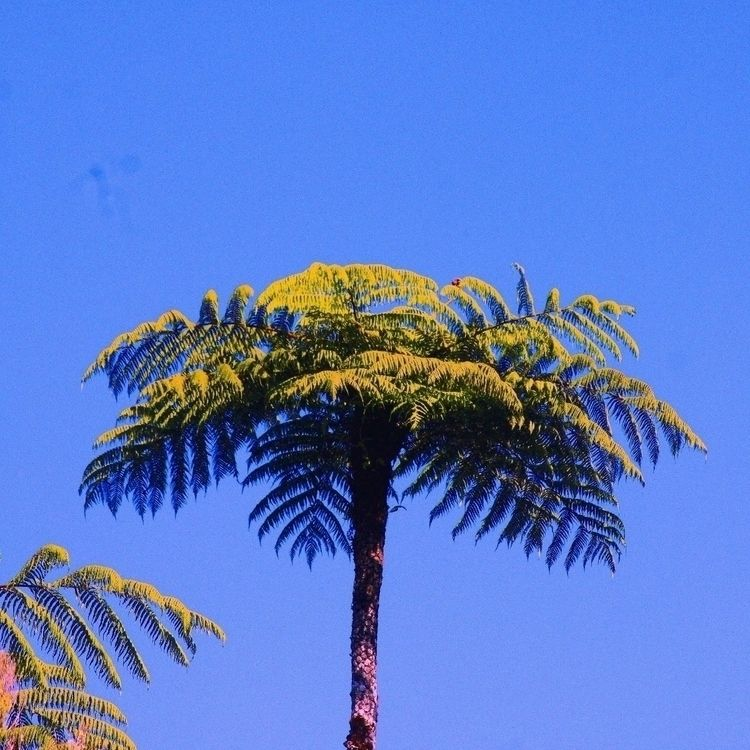 lareunion, reunionisland, palmtree - liboncd | ello
