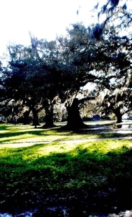 Trees in the row PB200050.jpg