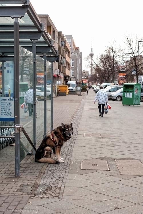 2016-02-10_Bound_Dog_Portra160_mid.jpg