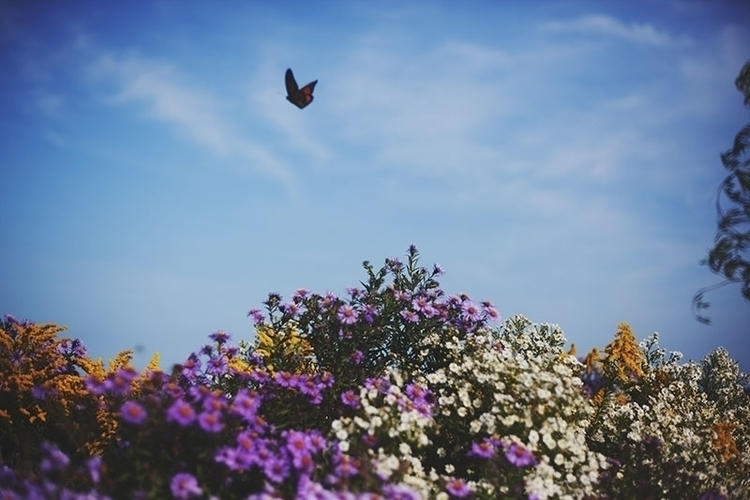 butterfly-flying-above-flowers.jpg
