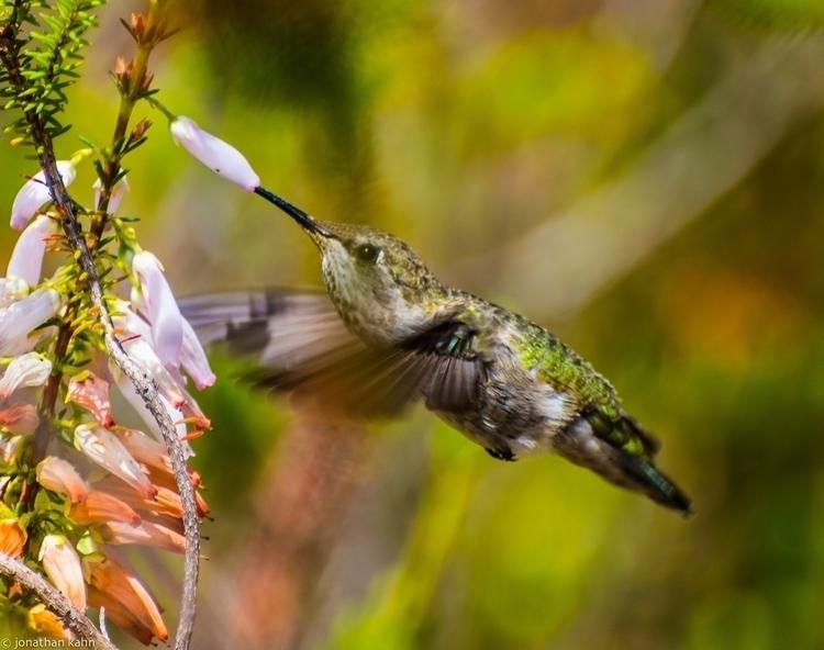 Hummingbirds #47.jpg