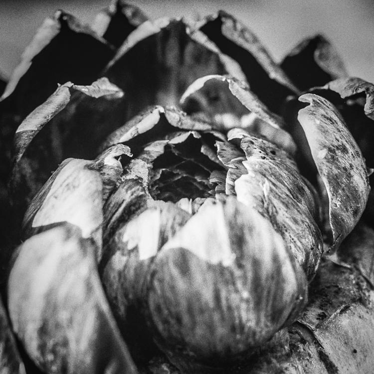 botanical-4.jpg
