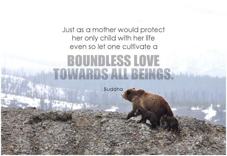 Buddha Just as a mother would protect her only child with her life even so let one cultivate a boundless love towards all beings.png