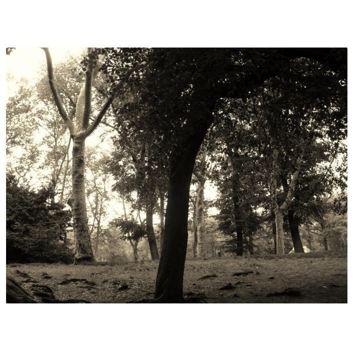 RKcptrees.jpg