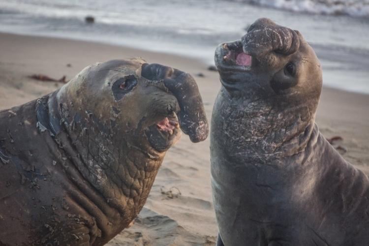 ugly-seals-07-11-2014.jpg