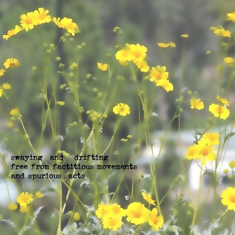 DSCN3477-haikuLBADN.jpg