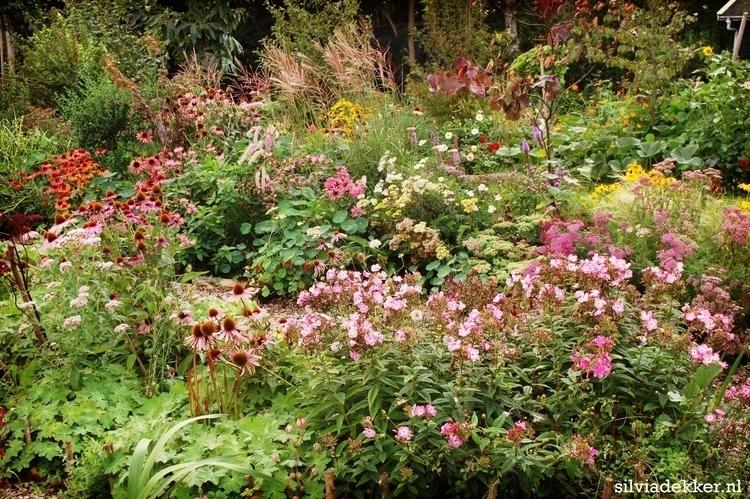 Silvia Dekker colour gardenb.jpg