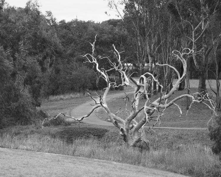 Tree B&@.jpg