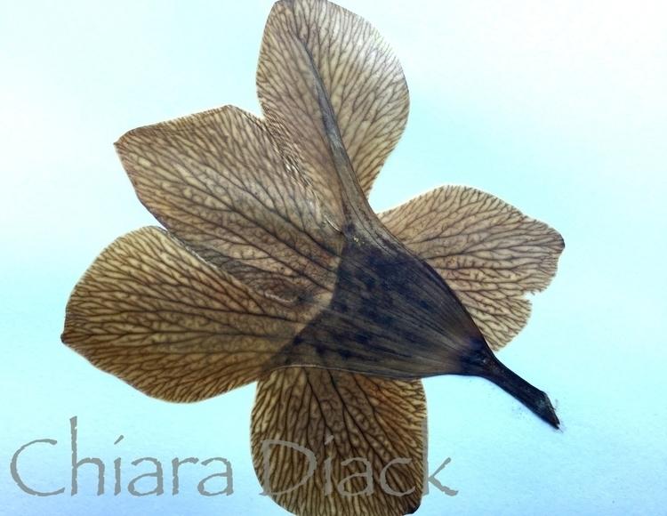 pressed flower.jpg