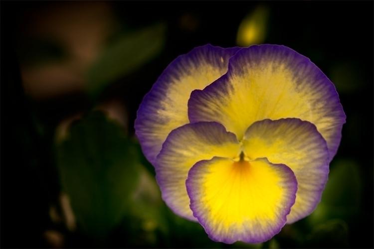 web-purple-and-gold.jpg