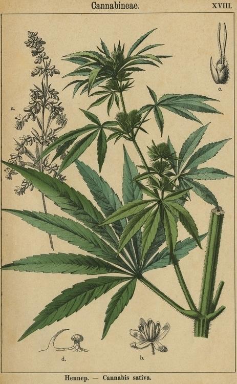 botanical print 3 003.274.jpg