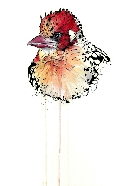 clown bird...#illustration art  - meganjurcak | ello