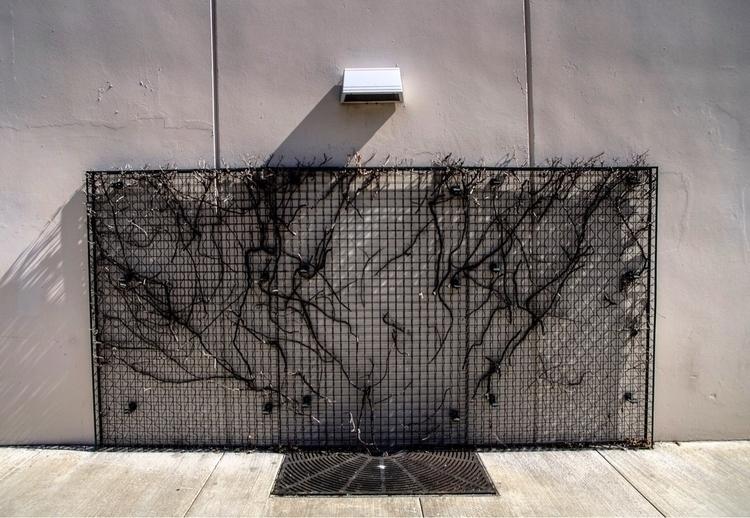 A cage caged burbank losanglele - talyo | ello
