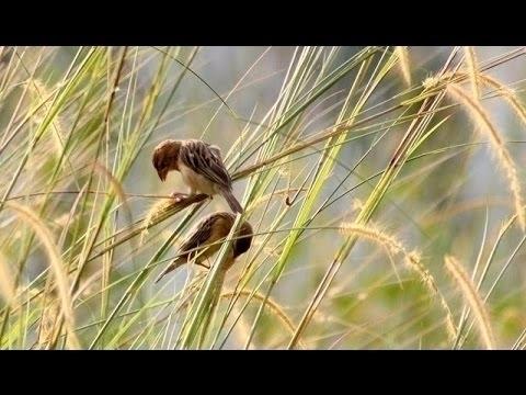 birds webadd - saifsharifullah | ello