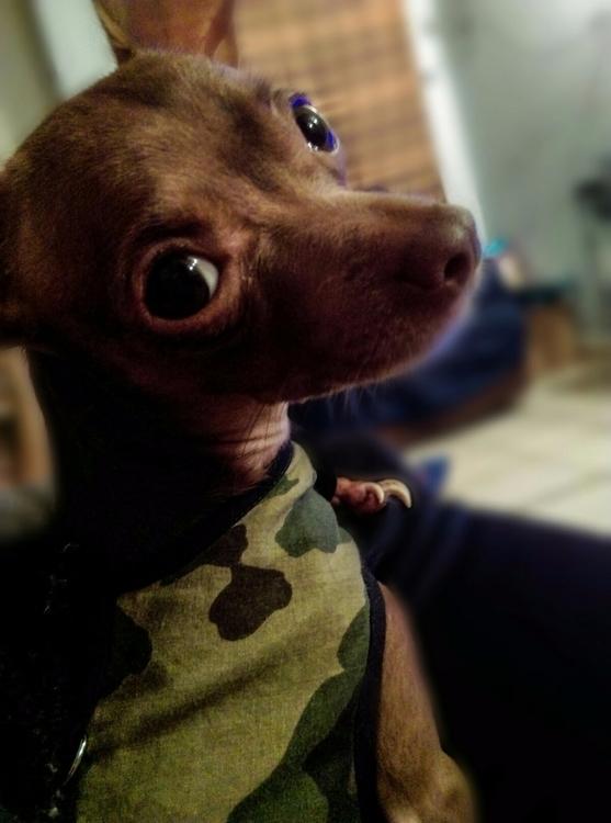My pet. <3 Ojona - zoco555 | ello