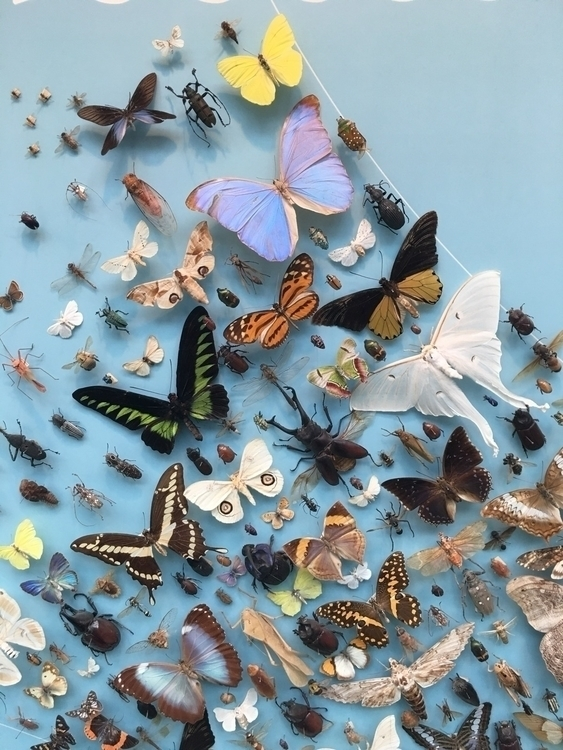 butterflies powderblue blue - howsweetthesting | ello