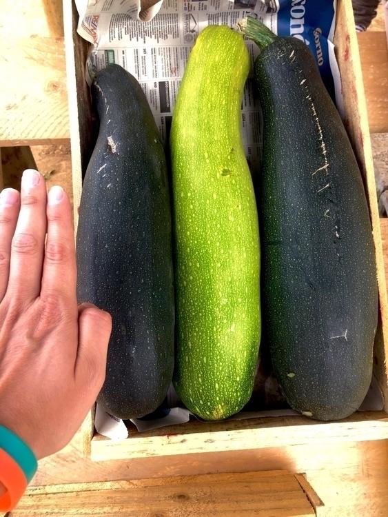 Big Ass Zucchini zucchini big t - renspacemadness | ello