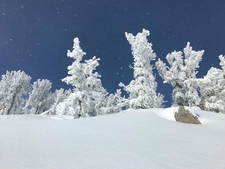 Big Powder day Heavenly Lake Ta - brickie | ello