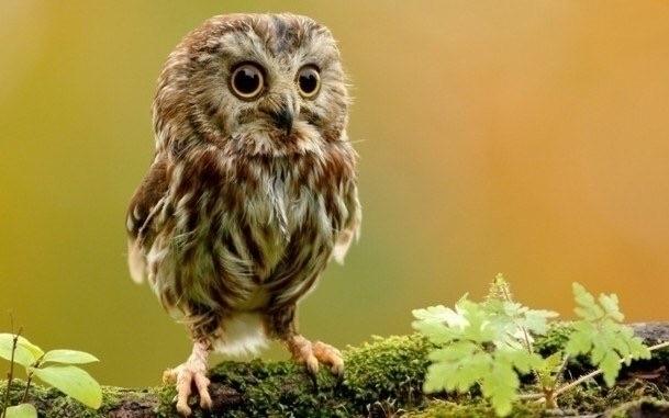 owl beautiful nature - rozifloyd | ello