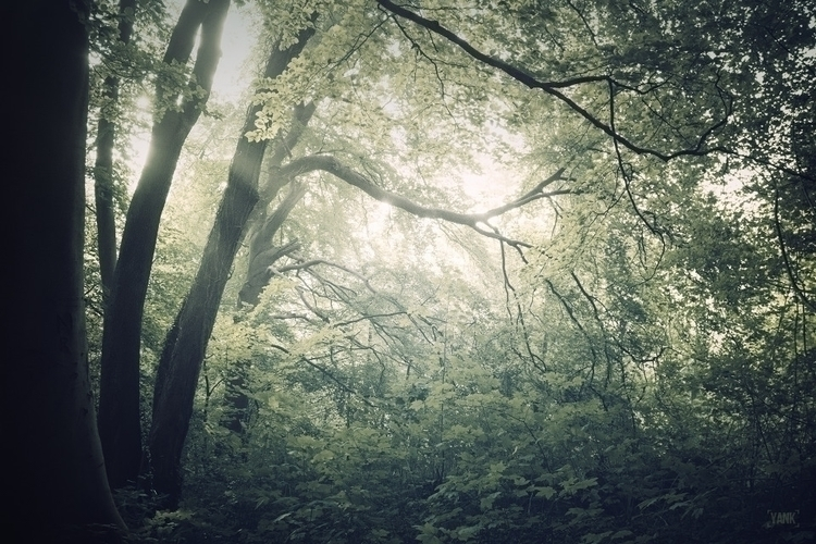 """Bright Lights"" forest trees na - yank- 