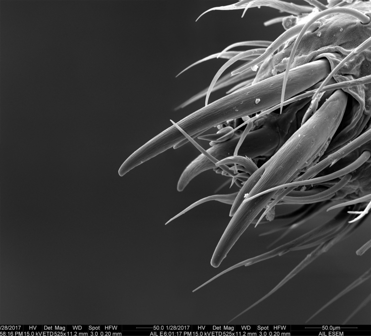 Spider Leg, 525x UAF SEM. stitc - obscuraworks | ello