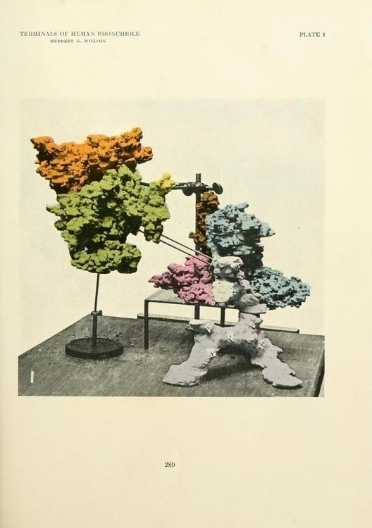 Plate 1. Terminals human bronch - modernism_is_crap | ello