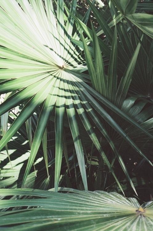 35mm palms Mexico - susannahvanderzaag | ello