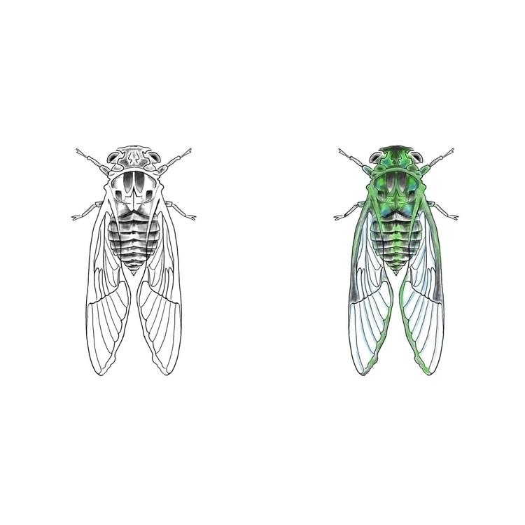 Cicada designs upcoming tattoo  - evanbook_studio | ello