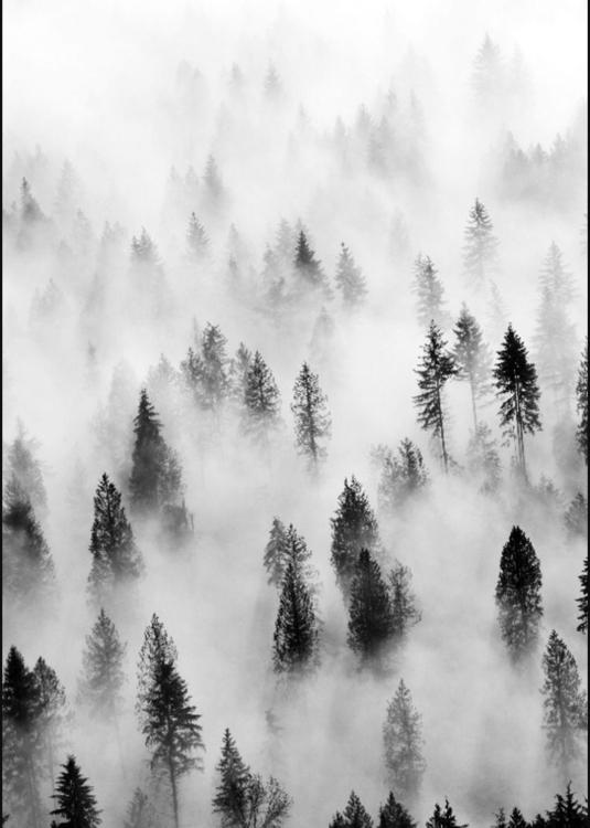 blackandwhite#forest#foggy - yomaira | ello