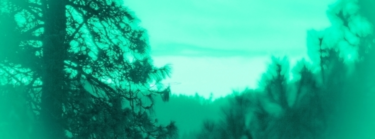 trees. pnw gorgeous. whitesalmo - _samjay_   ello