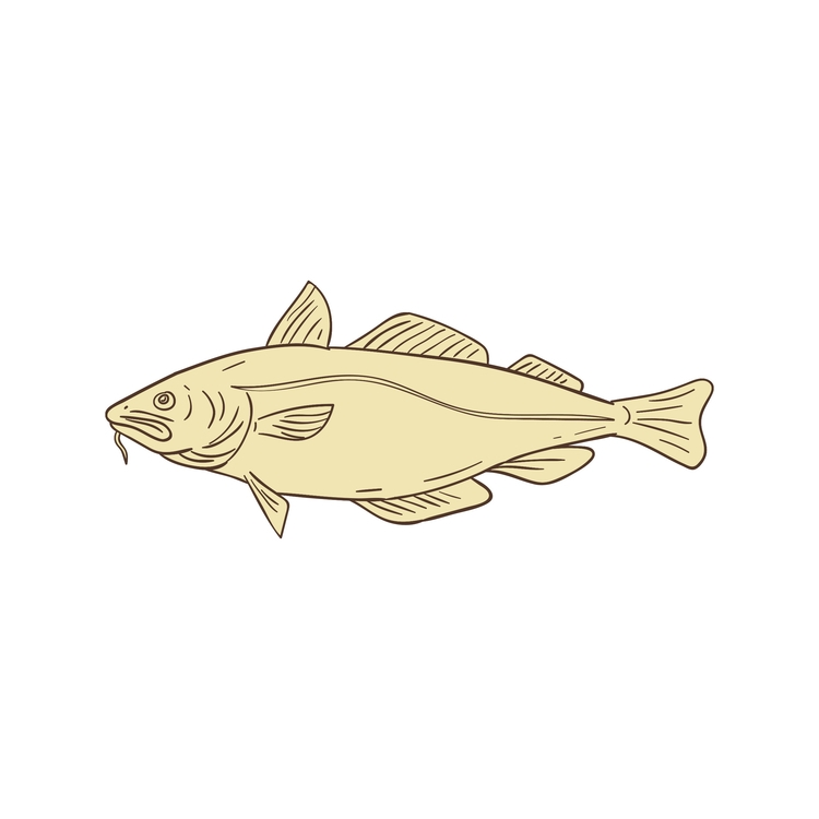 Atlantic Cod Fish Drawing retro - patrimonio | ello
