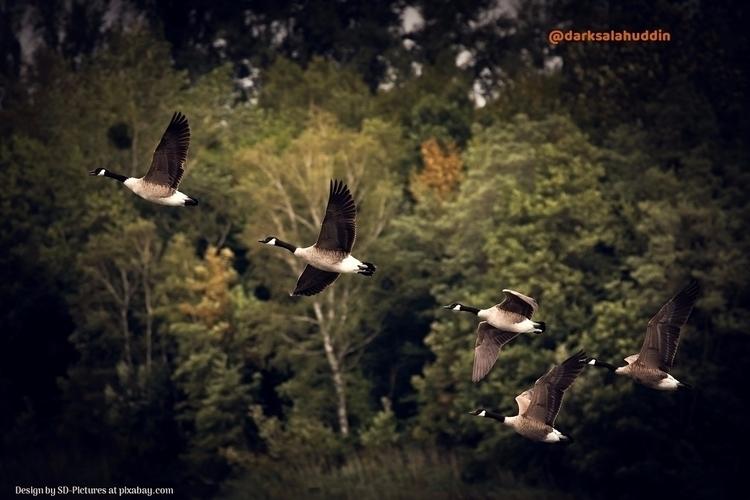 Autumn Geese darksalahuddin - darksalahuddin | ello