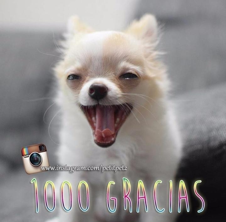 Ya somos 1000 seguidores en Ins - petitpetz | ello